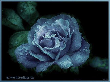 Cartes Virtuelles Fleuries Du Jardin De Tadine Fleurs Peche De