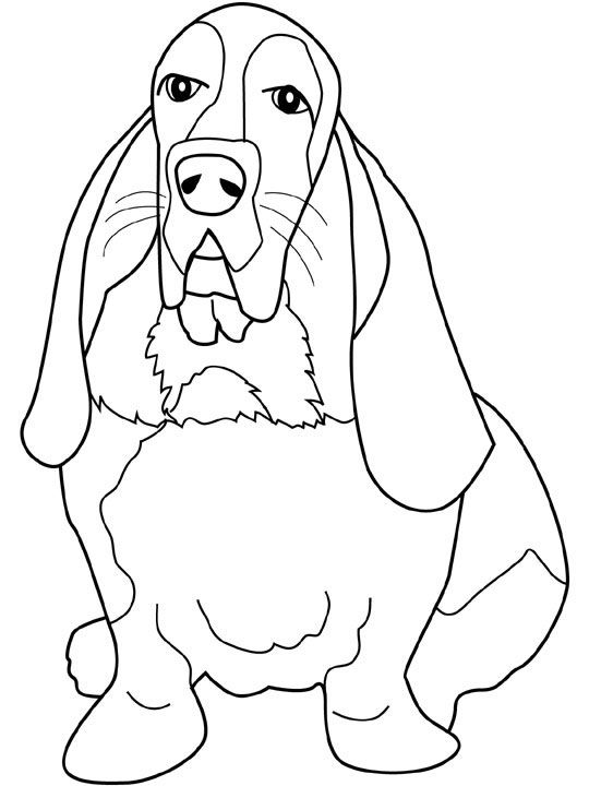 dog basset coloring pages - photo#11