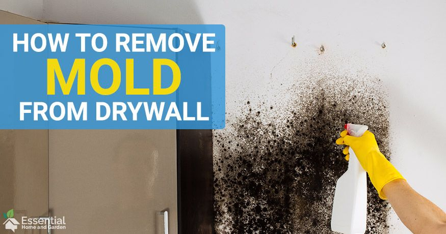 How To Remove Mold From Drywall Painted and Unpainted in