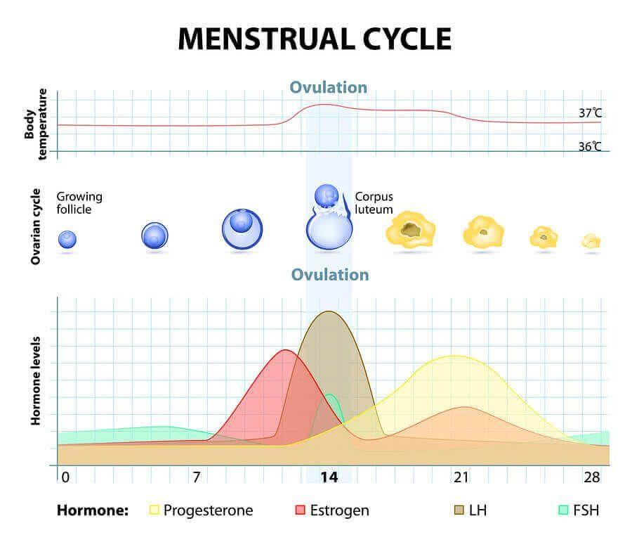 Ovulationstest negativ? Was du beim Testen beachten musst ...