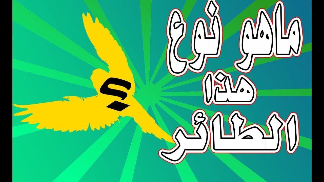 خمن وحاول التعرف على كل طائر من خلال طريقة وقوفه وحركة جناحيه Art Calligraphy Birds
