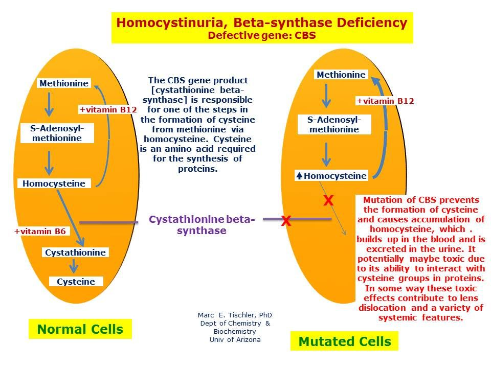 Cbs Mutation And Low Sulfur Diet Drjockers Com Cbs Mutation Methylation