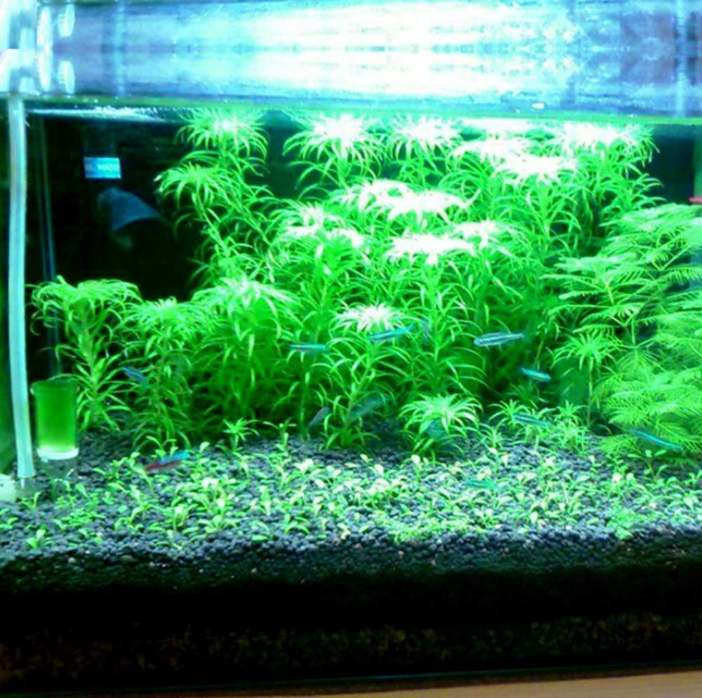 Best Aquarium Plants The High Level Substrate For Planting