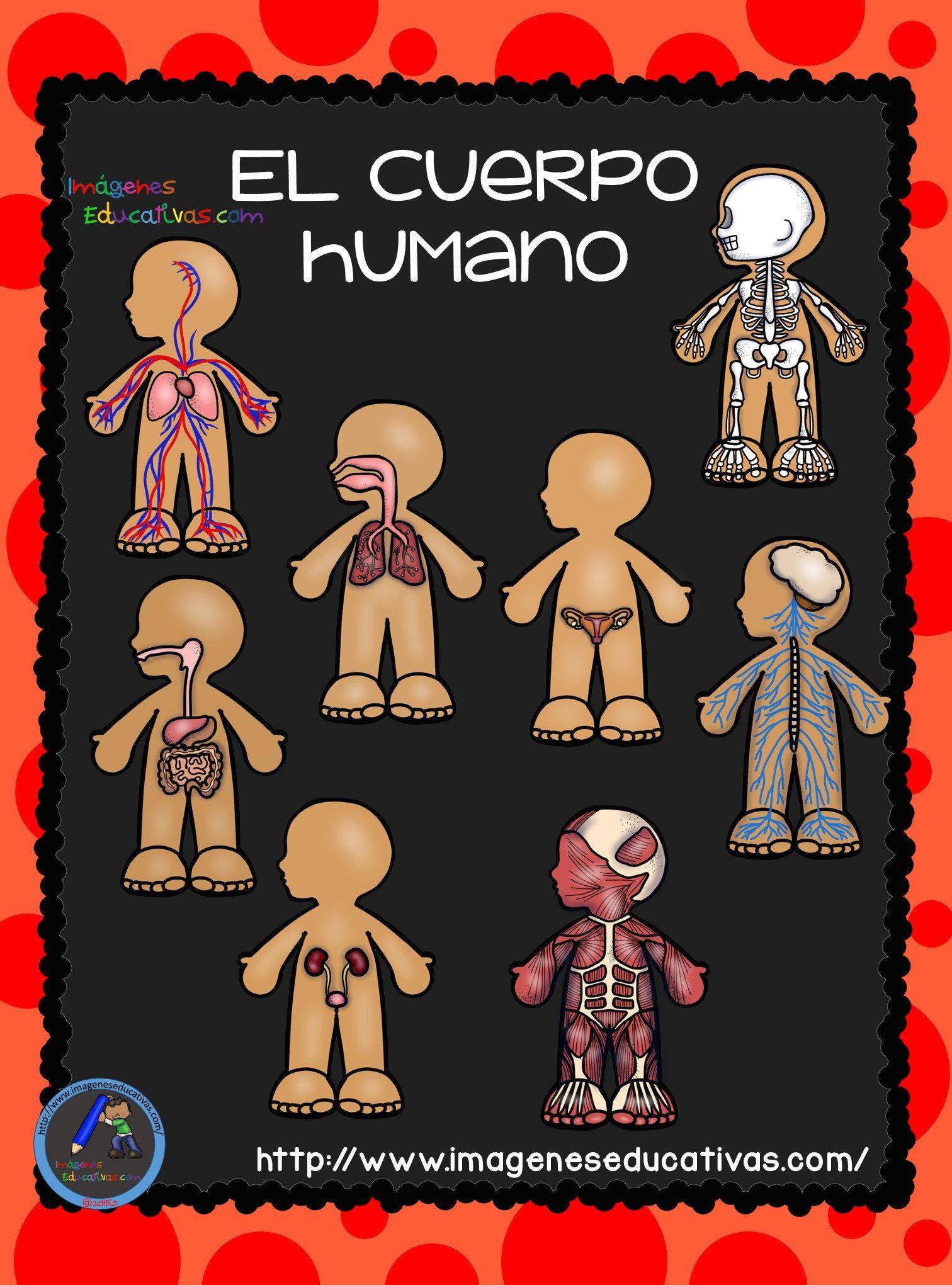 El Cuerpo Humano; Aparatos y Sistemas para Primaria | Pinterest ...