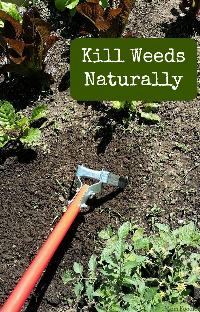 how to kill weeds in garden. kill weeds naturally how to in garden