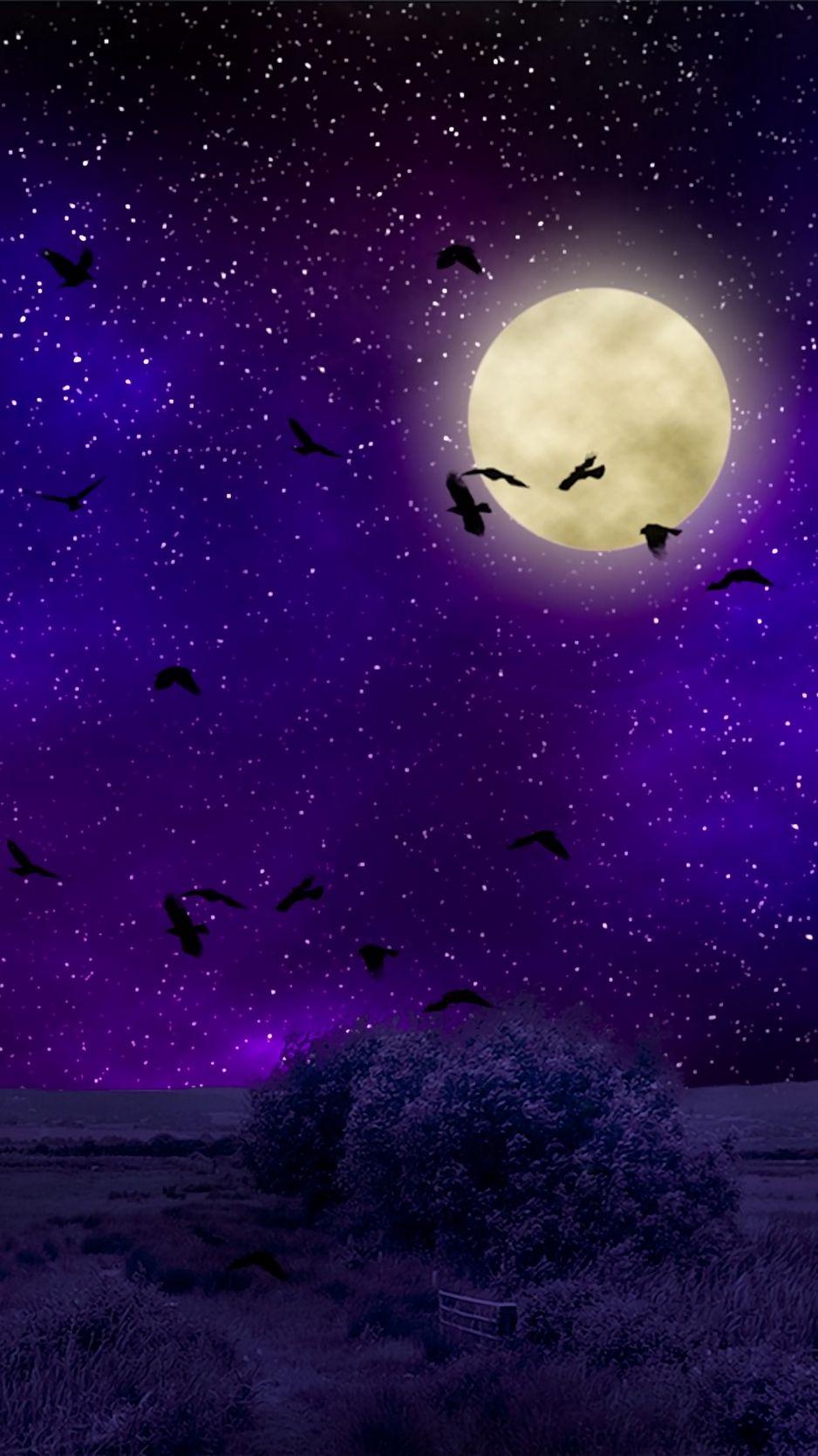Full moon, starry sky, birds, night, wallpaper