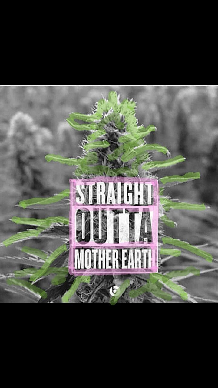 Mother Earth's Greatest Plant And Most Powerful Medicine Some People Use  Marijuana To Get High
