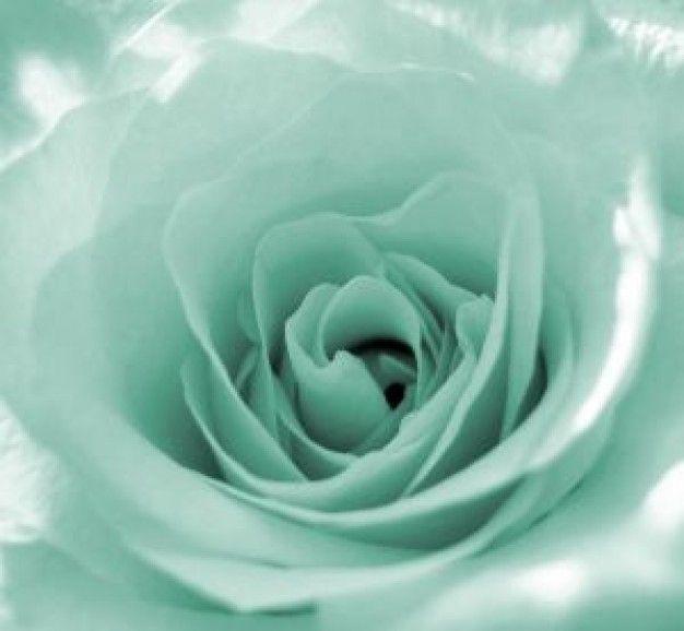 mint green | mint green rose
