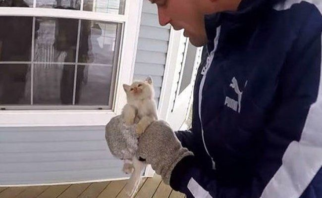 Man Revives Frozen Kitten With CPR for Over An Hour