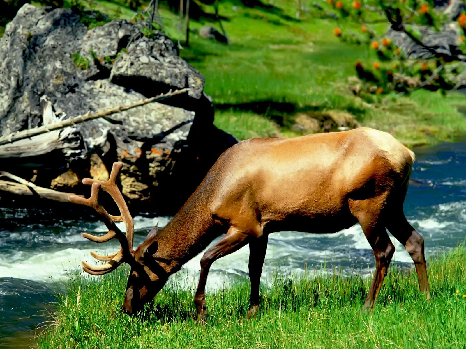 Beautiful Animal High Resolution Wallpapers Fond Ecran Animaux Animaux Cerf