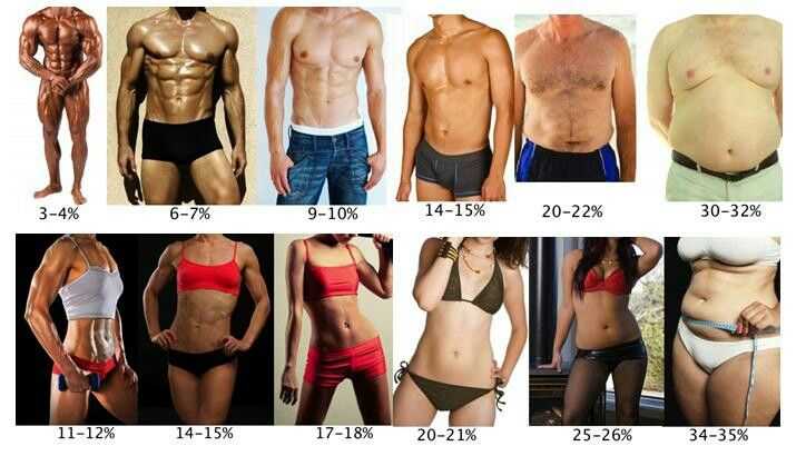 Rough male and female body fat percentage examples also bodybuilding rh pinterest
