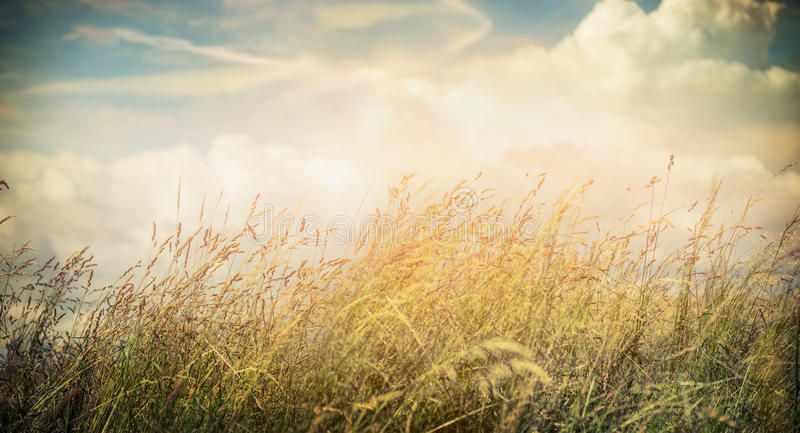 Summer Or Autumn Field Grass On Beautiful Sky Background Banner For Website Wi Aff Grass Beautiful F Beautiful Sky Beautiful Stock Photos Background