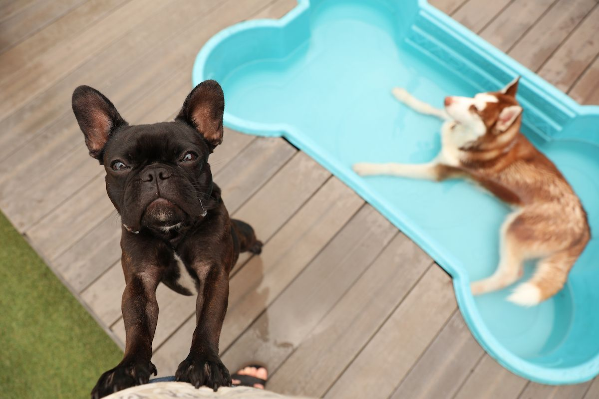 How much does doggy day care cost how to decide if its