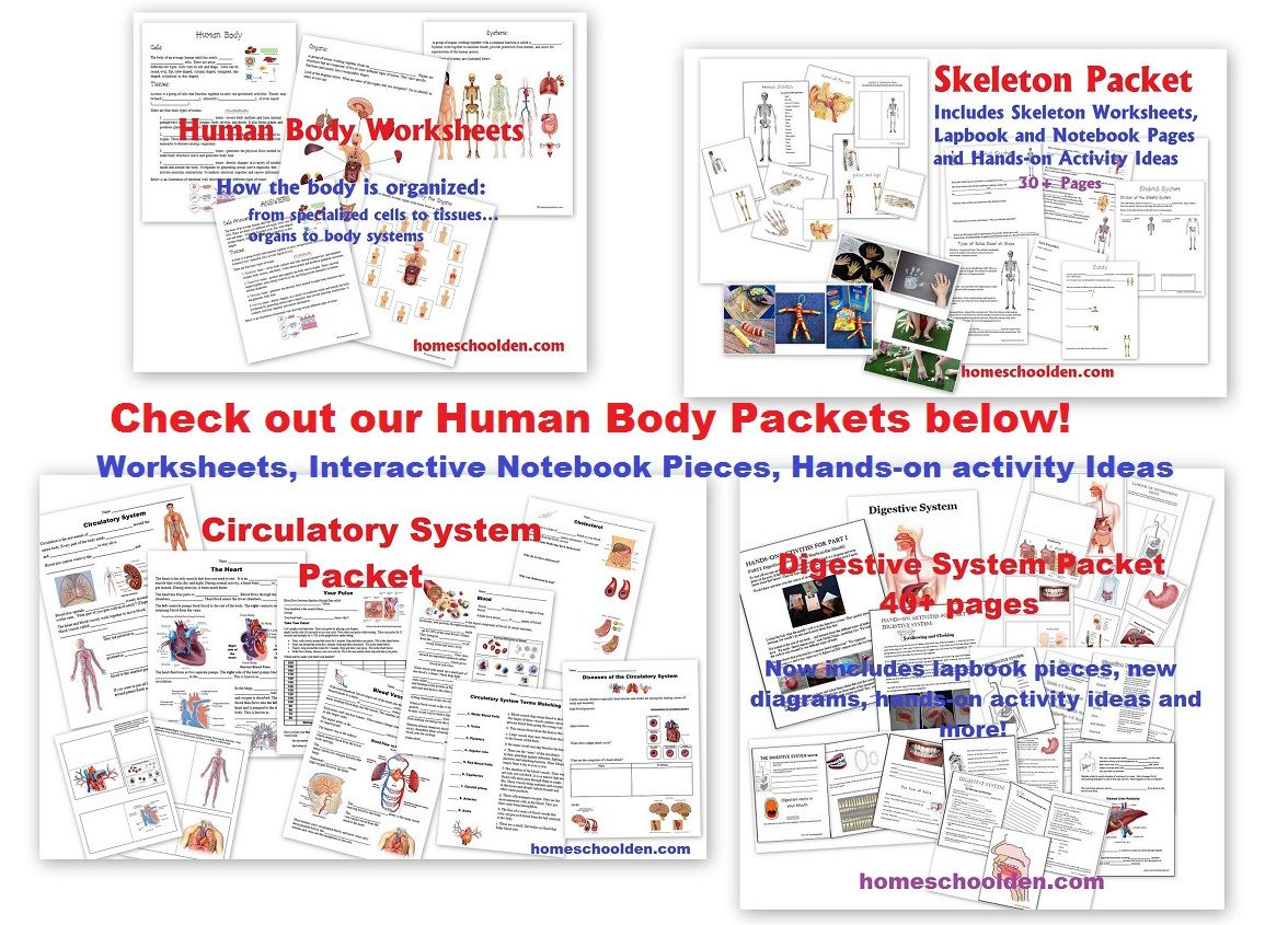 Homeschoolden Wp Content Uploads 04 Human Body