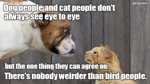Image result for the only thing dog and cat people agree on is bird people meme
