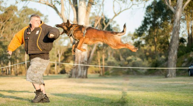 Image Result For Belgian Malinois Attacking Malinois Belgian Malinois Dog Runs