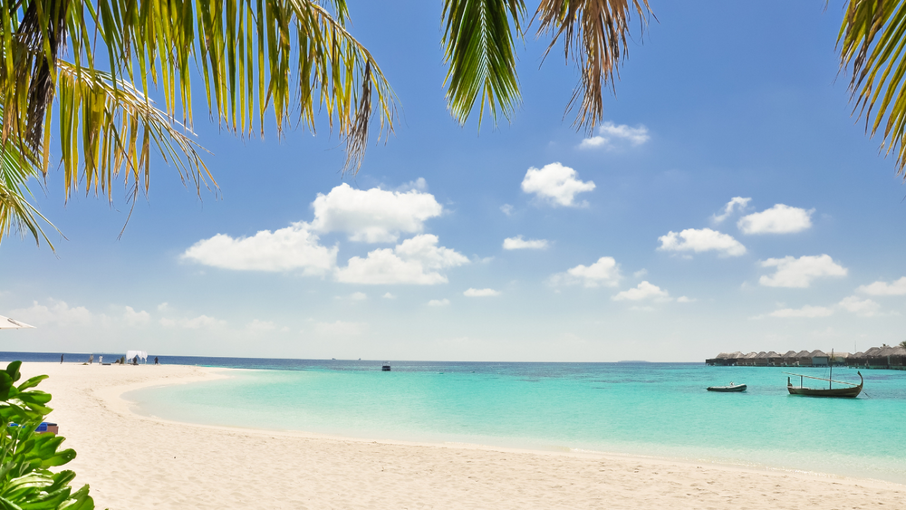Tropical Happiness Clickasnap Beach Wallpaper Backgrounds Free Background Images