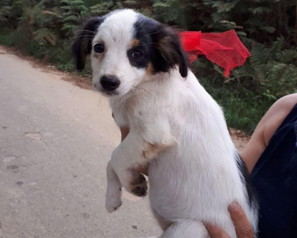 Varese PUFFETTA TAGLIA PICCOLA regalo cuccioli cani varese Vai all