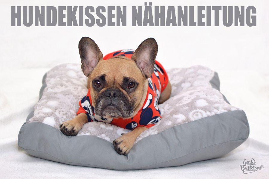 Photo of Instrucciones: Coser la almohada del perro usted mismo