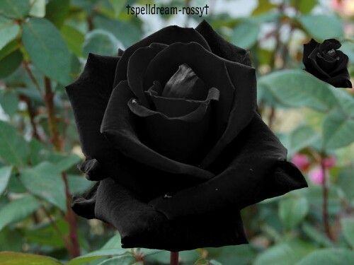 Flores De Color Negro - Buscar Con Google