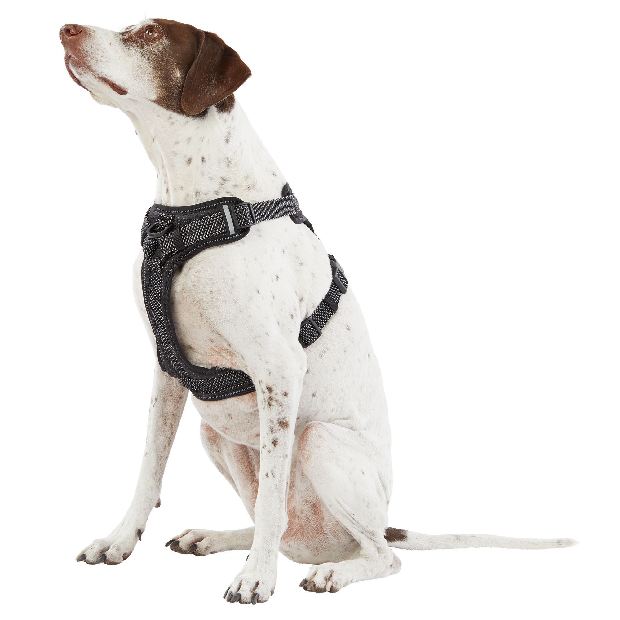 Top Paw Ultra Reflective Dog Harness Dog Harness Dogs Your Dog