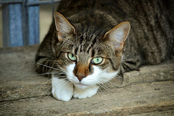 عندنا برشة محكيناش في أصول الكلمات في اللهجة التونسية تعدات قدامي قطوسة مش إلي في مخكم يهديكم قلت برى نعمل طلة Cat Behavior Cute Cat Breeds Cute Cats