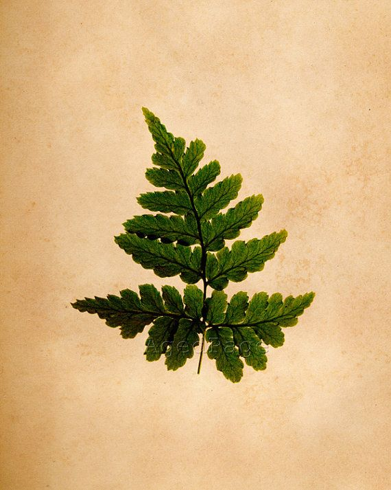 Fern Botanical Wall Art Print Vintage Inspired by AgedPage on Etsy ...