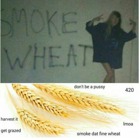 Smoke Wheat Every Day Funny Memes New Memes Funny Pictures