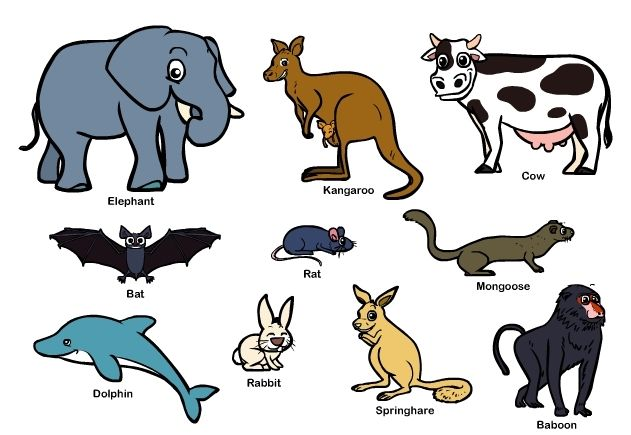 Mammals: facts about Mammals - Animals, Health Conditions - WWW ...