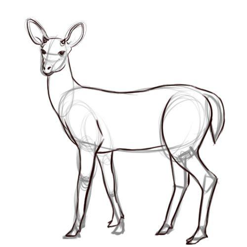 Line Drawing Deer : Outline step g … pinteres…