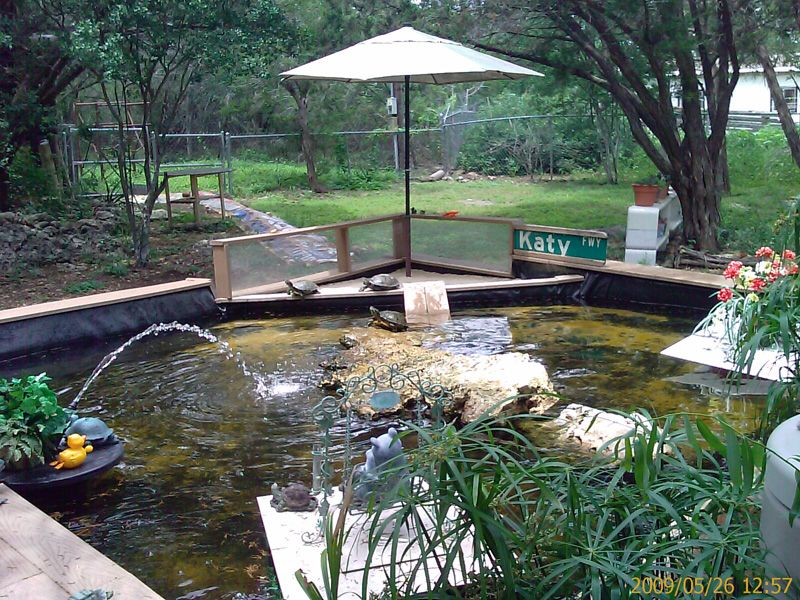 Turtle pond - This is what I want in the yard for Kenyon's ...