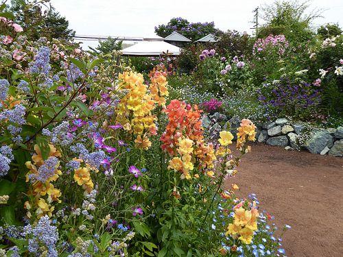 Annie S Annuals And Perennials Retail Online Nursery Plants Flowers