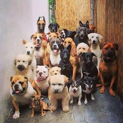 My family. Here is the gang!