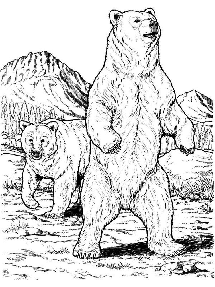 Brother Bear Coloring Pages The Following Is Our Bear Coloring Page Collection You Are Free To Download And Make Bear Sketch Bear Coloring Pages Bear Drawing