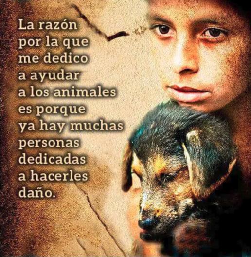 La Razón Por La Que Me Dedico A Ayudar A Los Animales Es Por