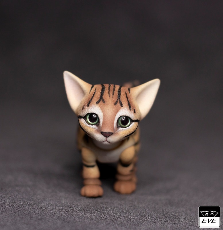 Bengal Kitten in 2020 Bengal kitten, Bengal kittens for