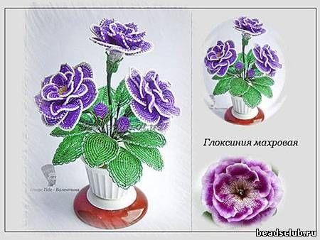 Схемы цветка глоксинии