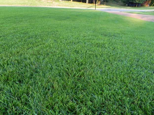 Best Alabama Grass Hybrid Zoysia Mike S Uncle Uses At