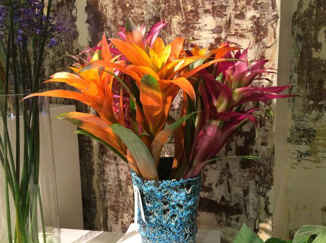 fleurs #tropicales #guzmania | fleurs et potager - flowers