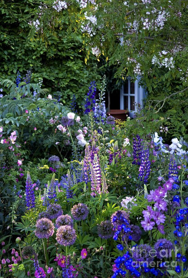 Photo of Cottage Garden by Liz Eddison