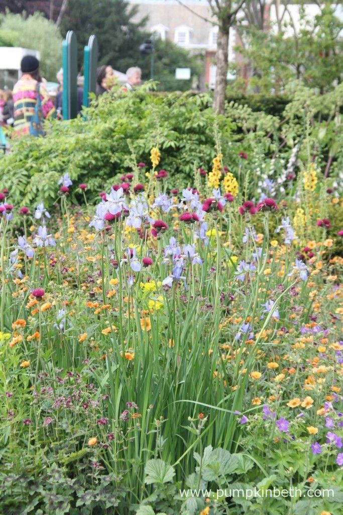 The Homebase Garden An Urban Retreat Colorful Garden Garden
