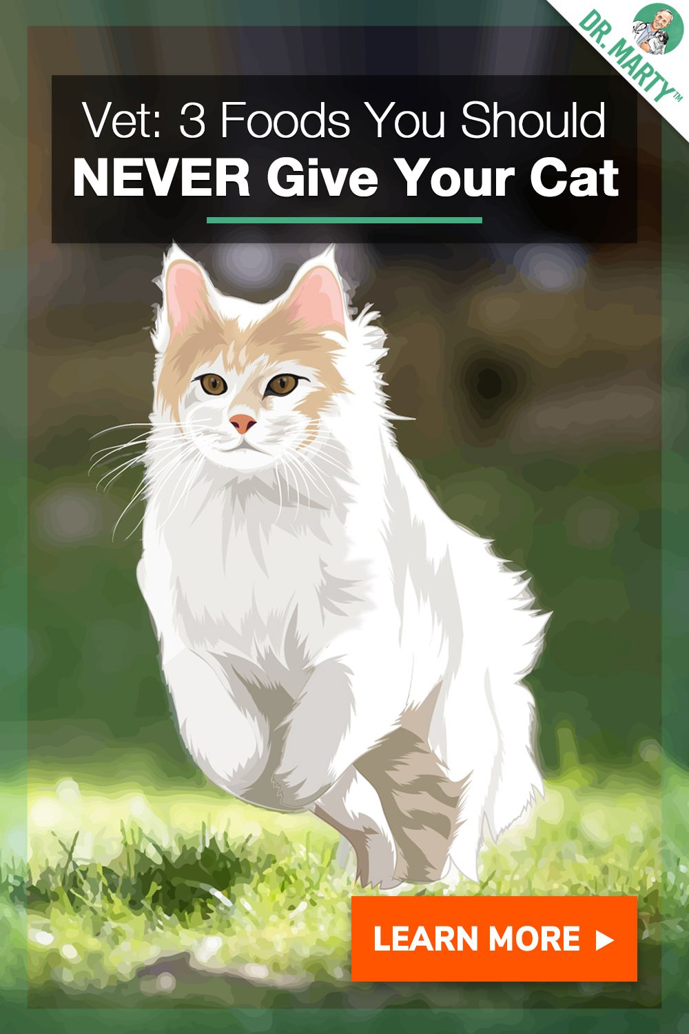 3 Foods You Should Never Give Your Cat Cats, Vets, Animals