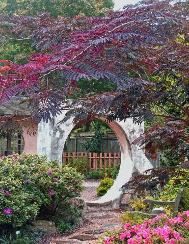 albizia julibrissin 39 summer chocolate 39 mimosa tree cultivar unusual for a garden pretties. Black Bedroom Furniture Sets. Home Design Ideas