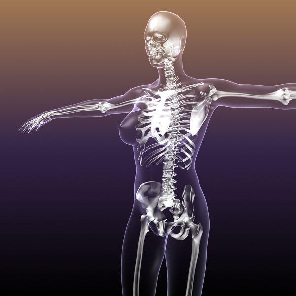 Female Skeleton inside Woman Body 3D Model- THIS SCENE RENDERS ...