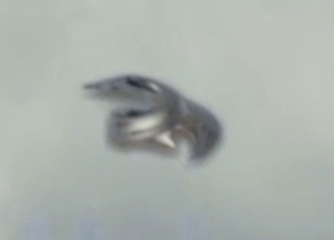 Pin On Freaky Paranormal Ufo