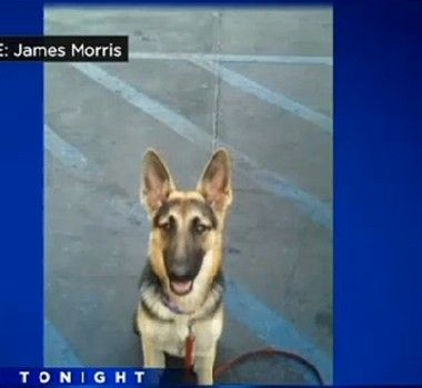 According To Sunday S Cbs Sacramento News A German Shepherd Puppy