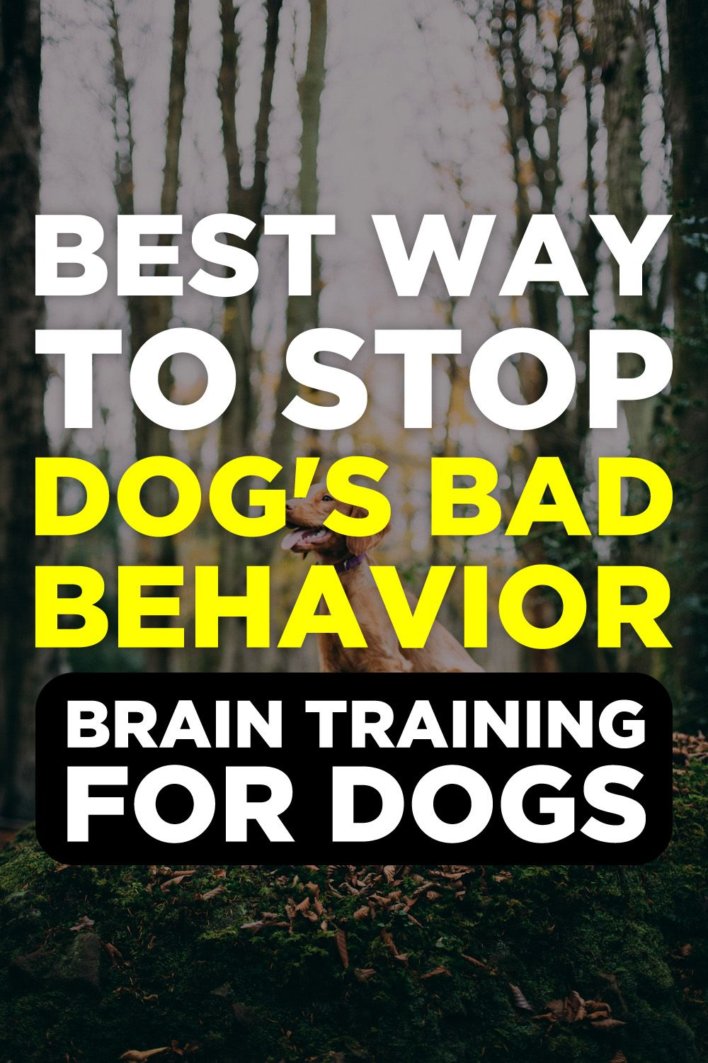 Brain training for dogs review dog training videos