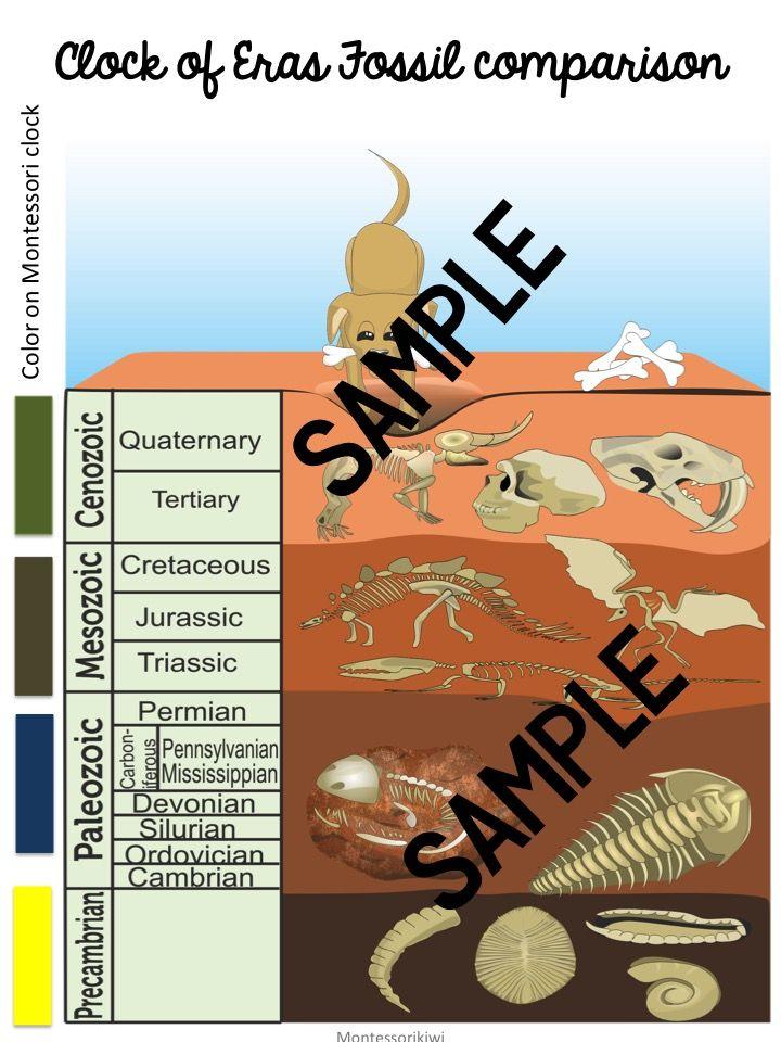 Montessori Clock of Eras fossil comparison chart FREE ...