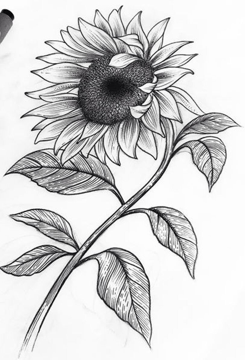 La Flor Del Jirasol Flores Dibujadas A Lapiz Girasoles Dibujo