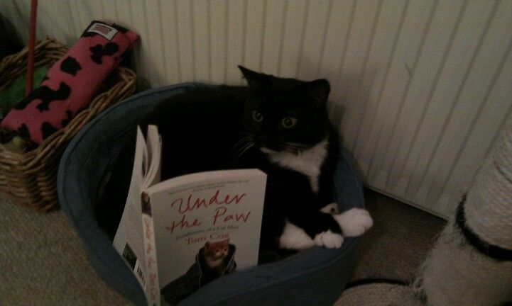 Frankie enjoying a bit of bed time reading!